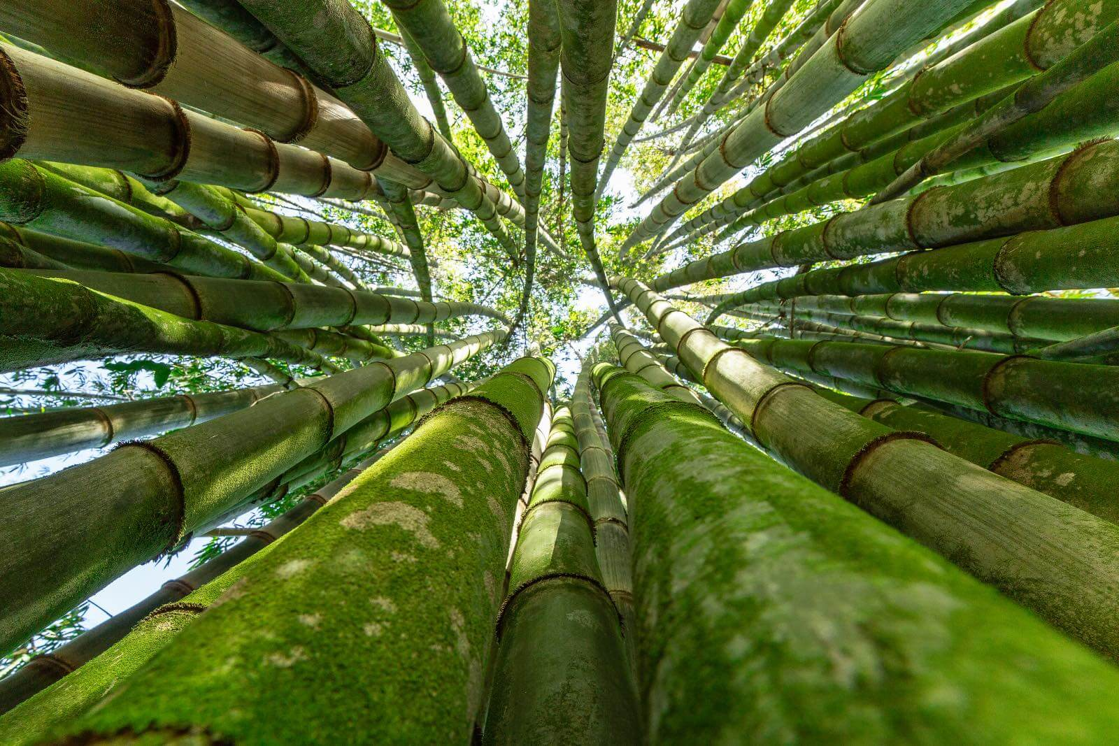 Places in Maui at the bamboo forest with I'm Jess Traveling