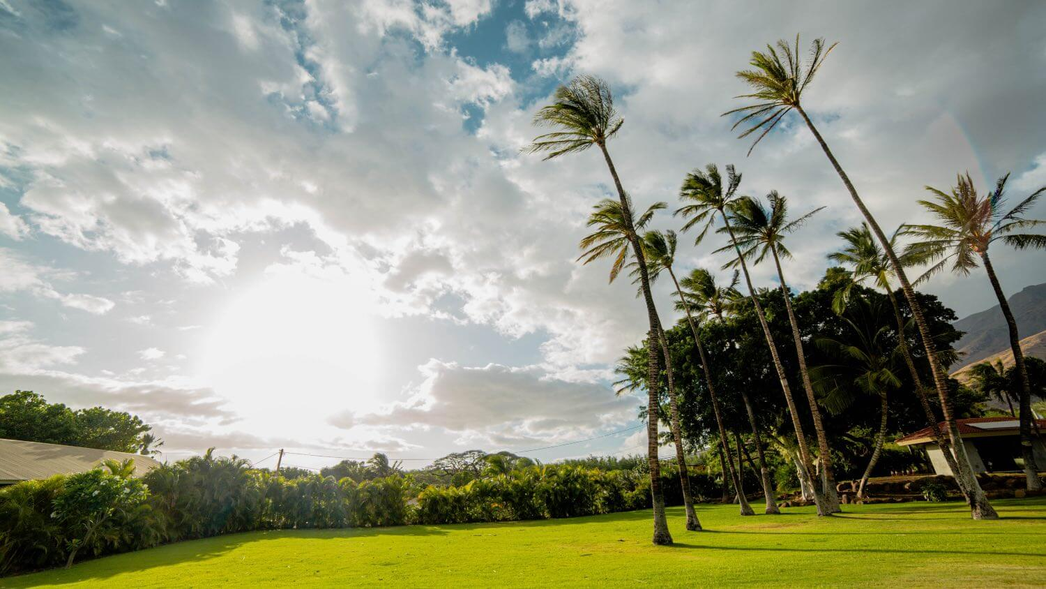 Palm Trees and green grass on the grounds of Camp Olowalu