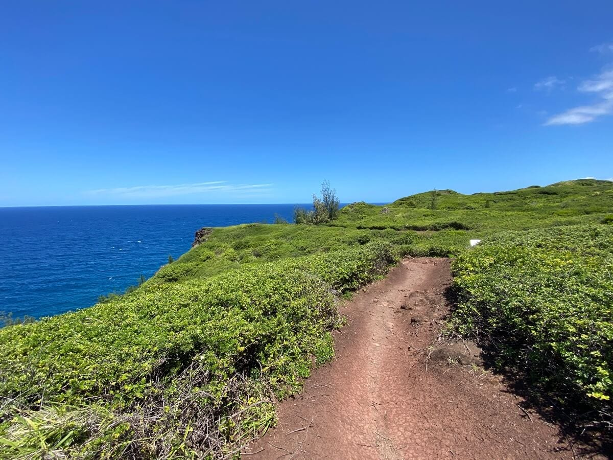 Ohai Trail on West Maui