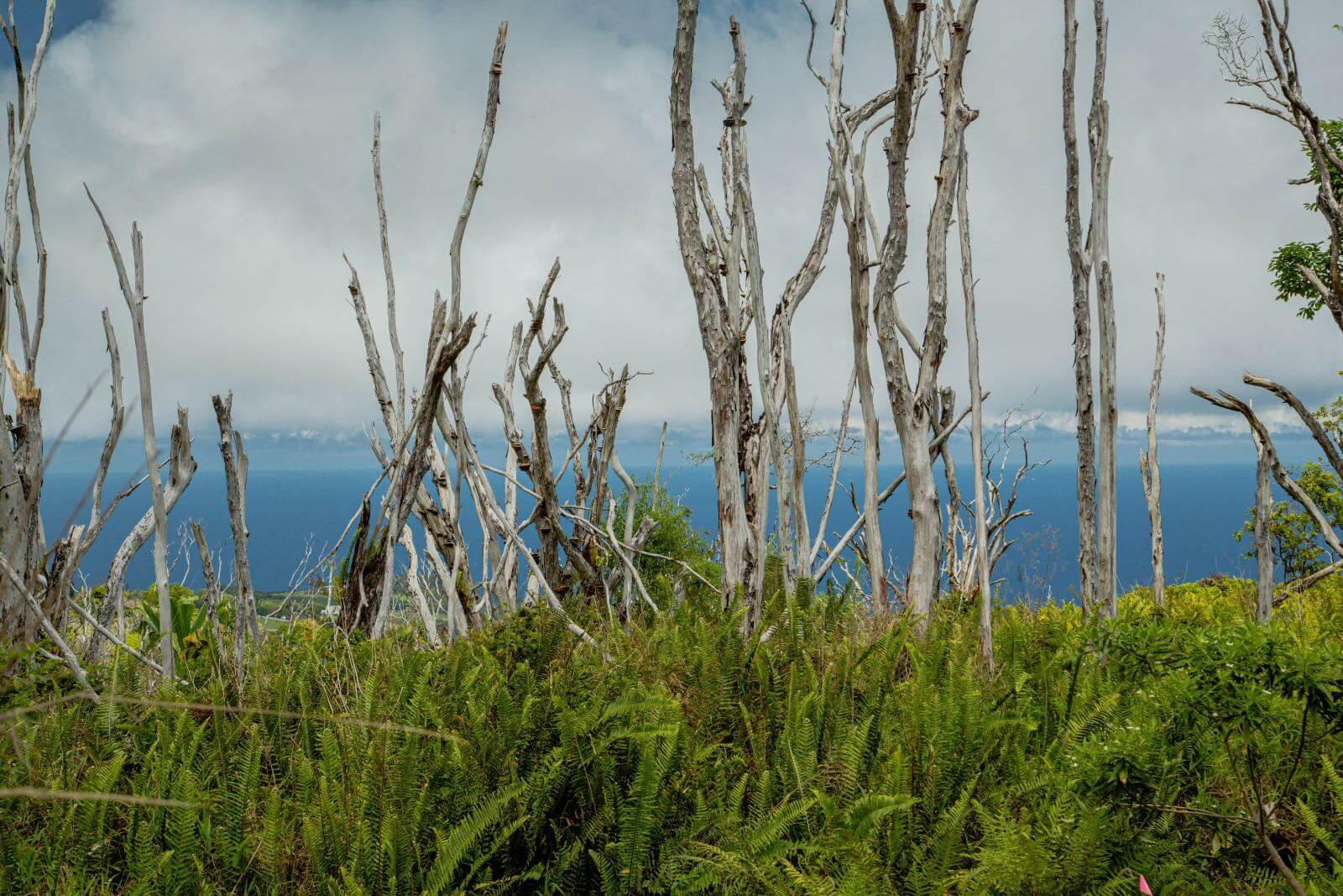 Bare trees with an ocean in the background