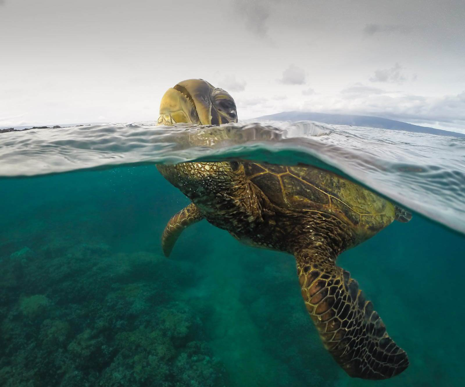 Snorkeling with sea turtles on Maui