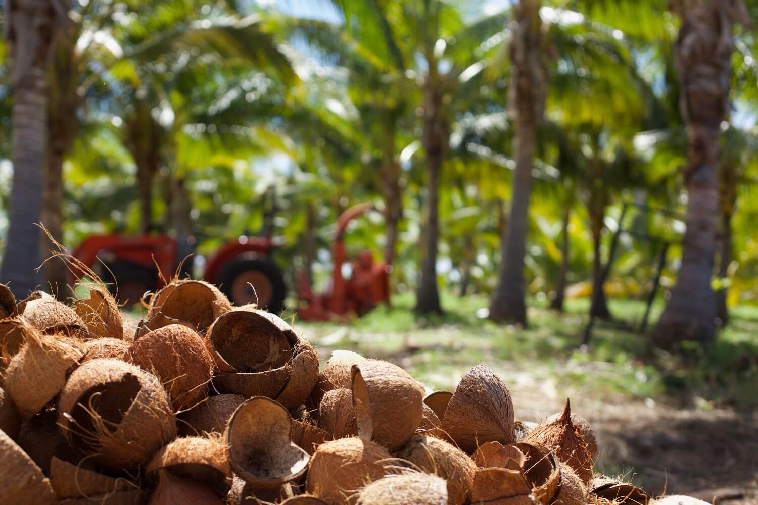 A pile of coconut shells on Maui