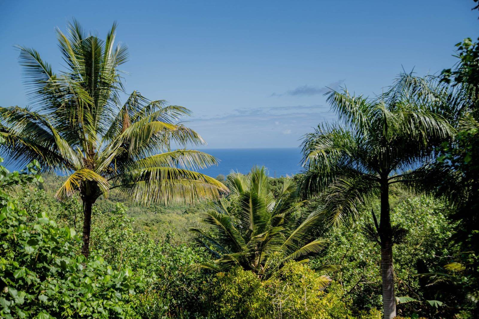 A beautiful outlook on the road to Hana