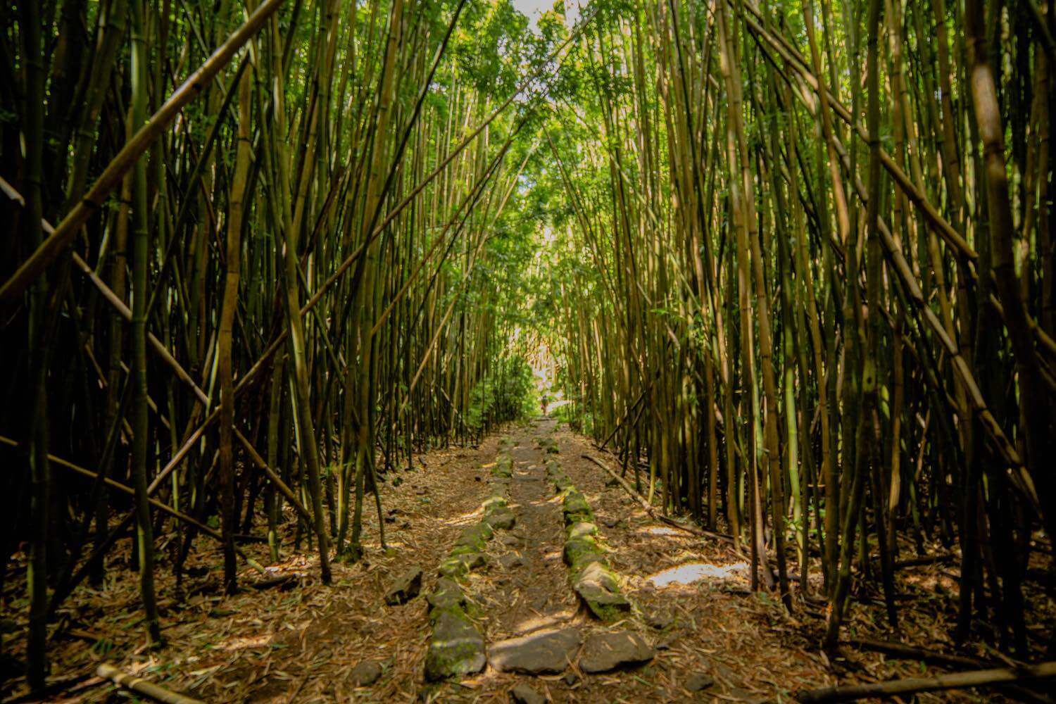 The Pipiwai Trail inside Haleakala National Park
