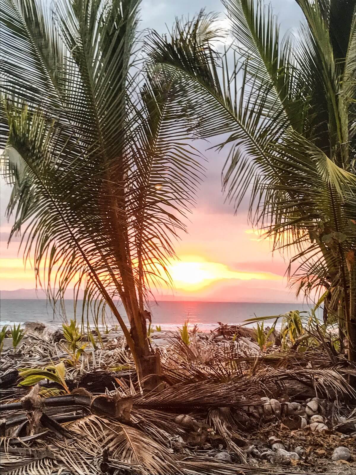 Sunset between 2 palm trees in Zancudo, Costa Rica