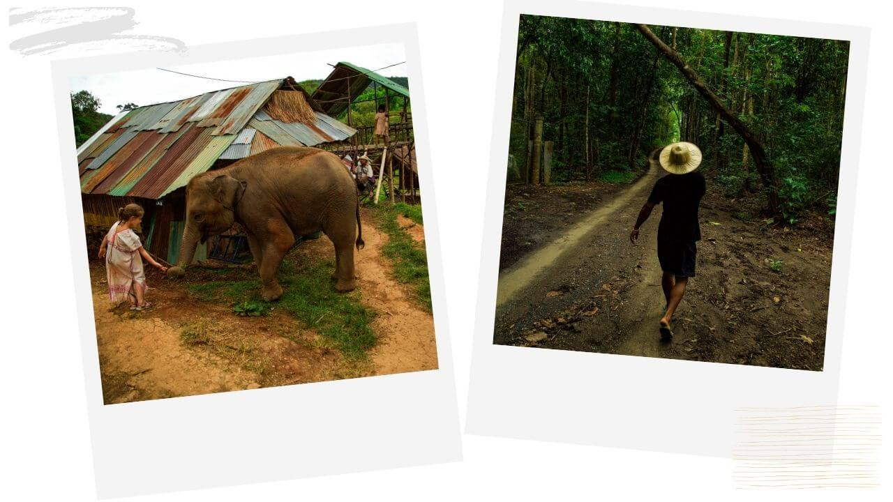 Hanging with elephants in Chiang Mai Thailand