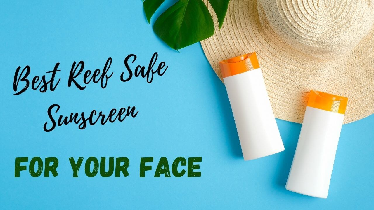 The best reef safe sunscreen products for your face .